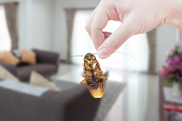 cockroach allergy FAQ