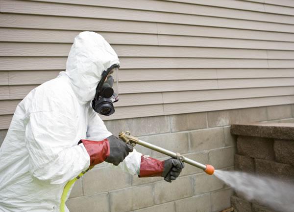 expert pest controller