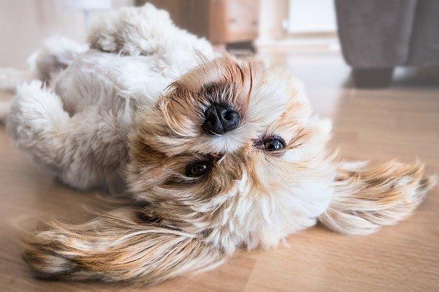 pet fur fleas