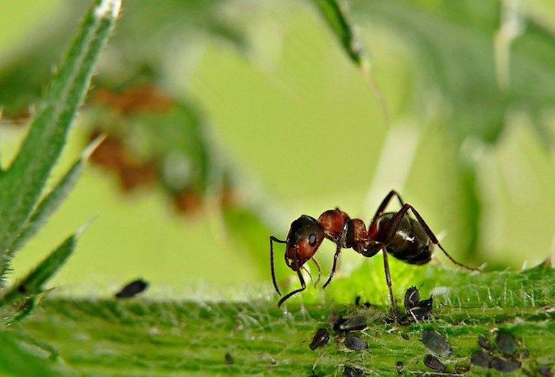 ant control in cambridge