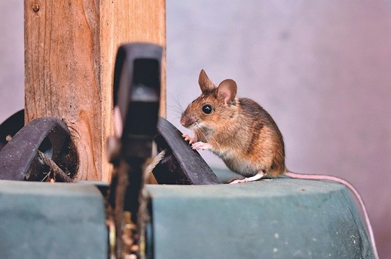 mouse control in cambridge