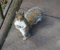 squirrel near fence