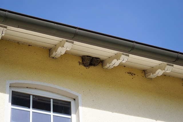 nest walls